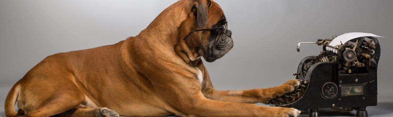 humor public relations dog writing